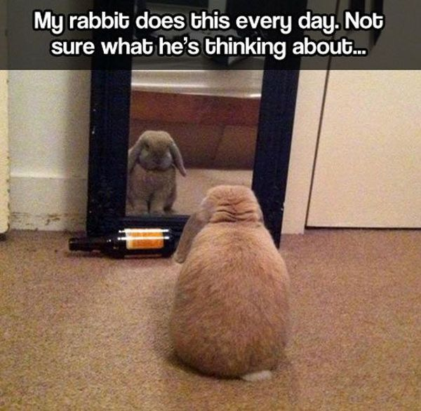 Introspective Bunny - Funny pictures