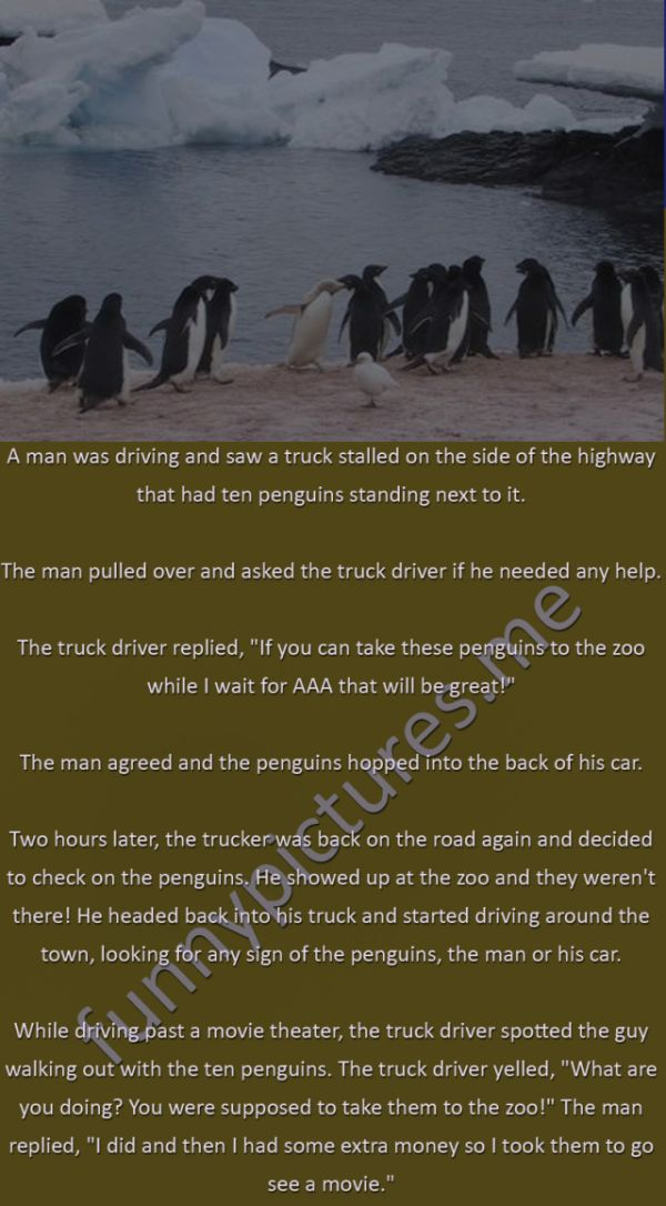A Day With The Penguins - Funny pictures