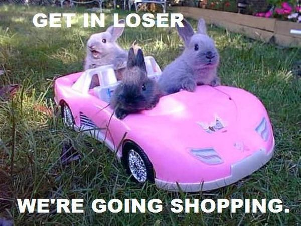 Get In Looser - Funny pictures