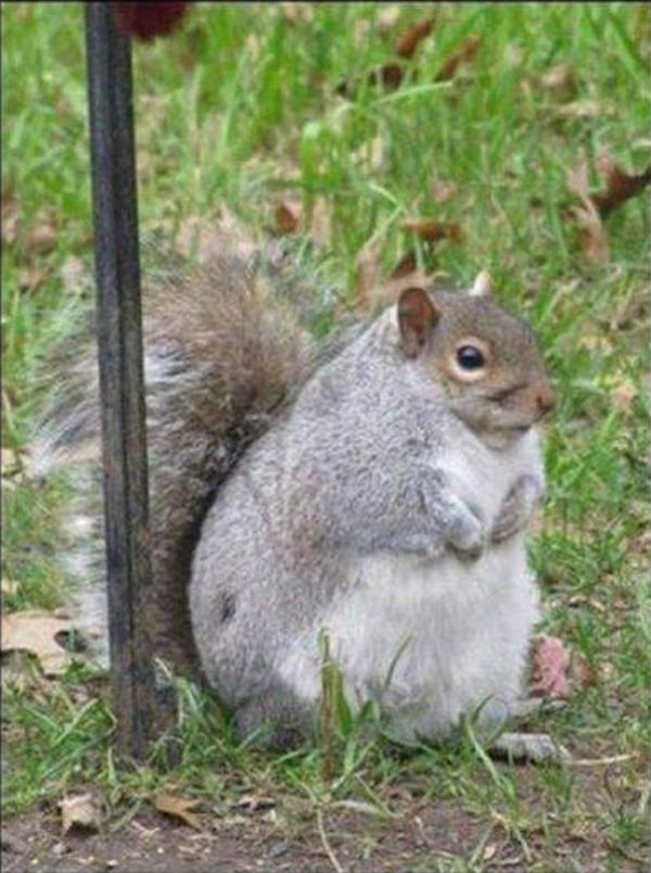 I Can't Find My Nuts - Funny pictures