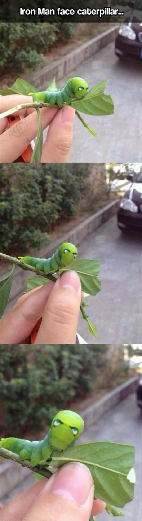Iron Man Face Caterpillar - Funny pictures