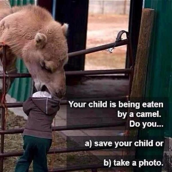 Your Child Is Being Eaten By A Camel - What Do You Do? - Funny pictures