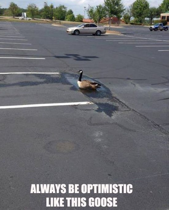 Always Be Optimistic Like This Goose - Funny pictures