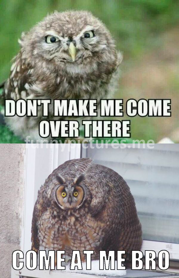 Don't Make Me Come Over There - funny pictures