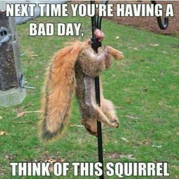 Next Time You're Having A Bad Day - Funny pictures