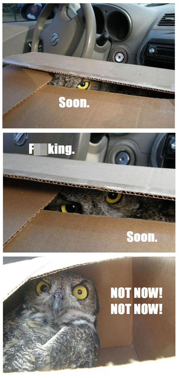 Soon... - Funny pictures