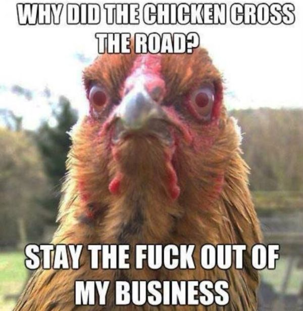 Why Did The Chicken Cross The Road? - Funny pictures