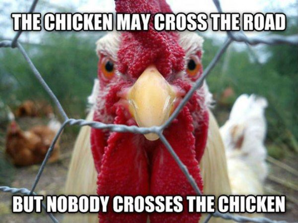 The Chicken May Cross The Road - Funny pictures