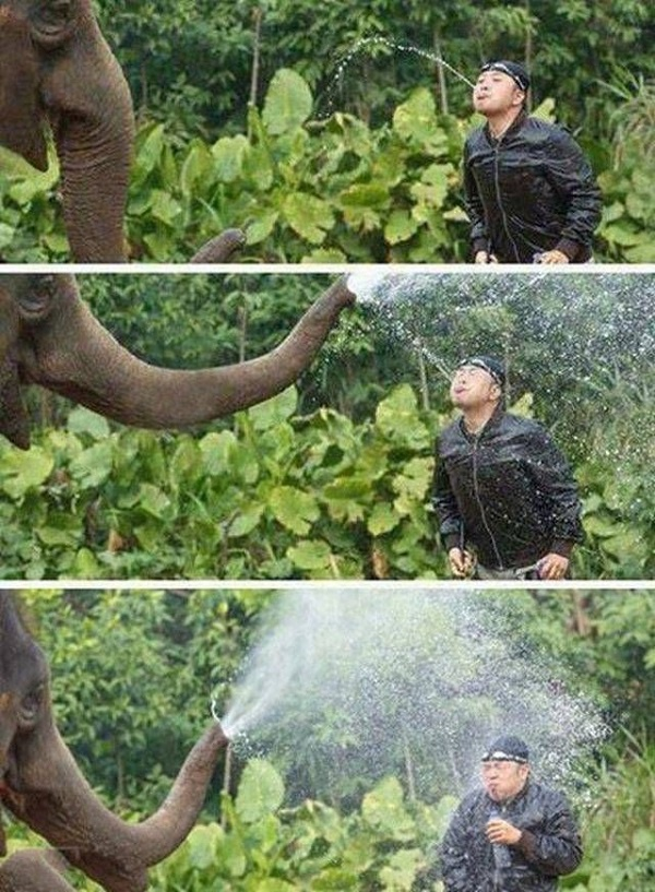 Don't Mess with Elephant - Funny pictures