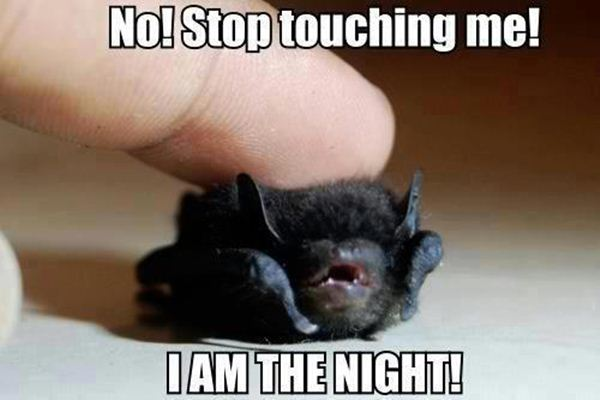 No! Stop Touching Me! - Funny pictures