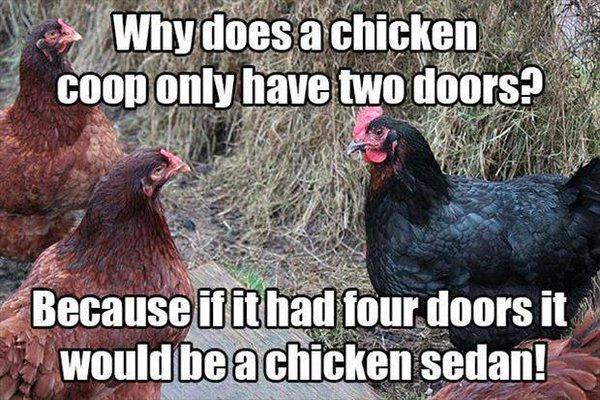 Why Does A Chicken Coop Only Have Two Doors - Funny pictures