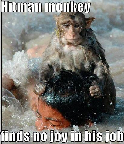 Hitman Monkey Funny Pictures