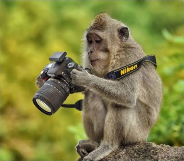 Monkey Business - 6 Pics - Funny Pictures
